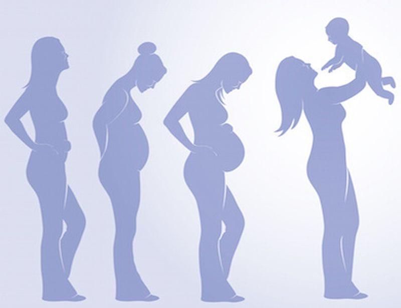 Endogestazione i 3 periodi della gravidanza